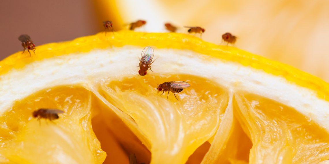 9 способов: как избавиться от мелких мошек на кухне