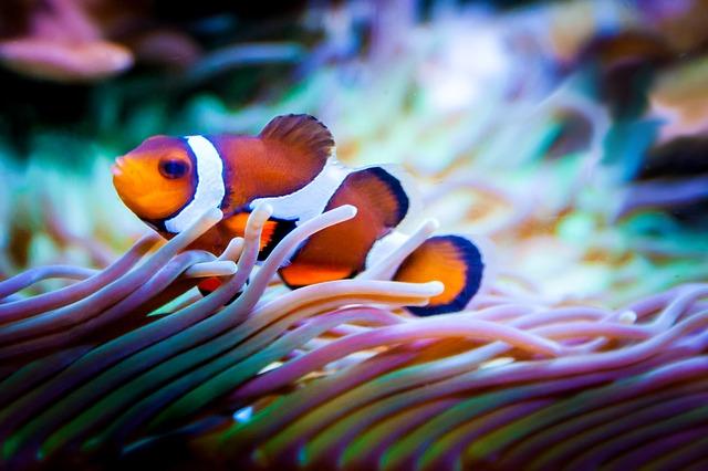 Как чистить аквариум в домашних условиях, как содержать аквариум в домашних условиях, инструкция