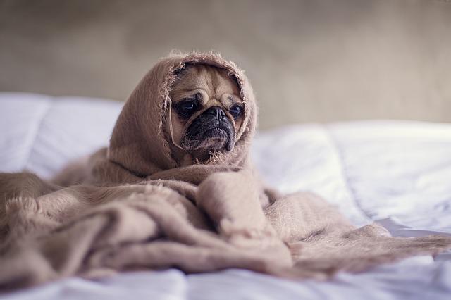 Как стирать одеяло, можно ли стирать одеяло в стиральной машине
