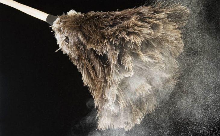 Пылевые клещи: как избавиться в домашних условиях