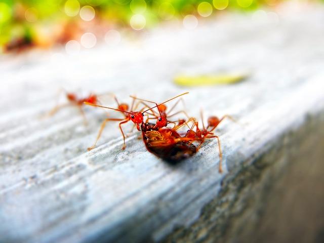 15 средств от муравьев в квартире, как избавиться от домашних муравьев