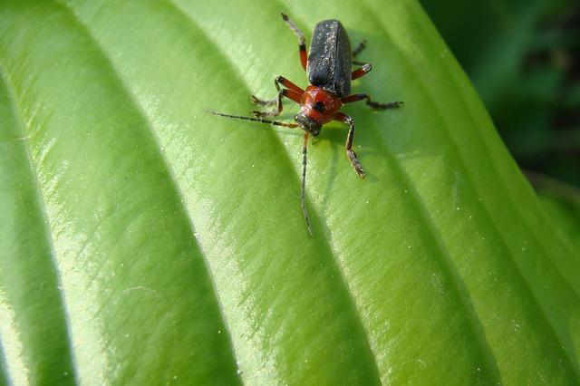 Как вывести тараканов, как бороться с тараканами в квартире
