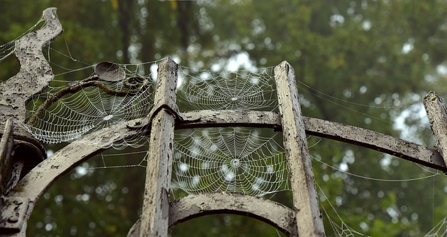 Домашние пауки: разновидности пауков, можно ли убивать пауков в квартире, как избавиться от пауков в доме навсегда