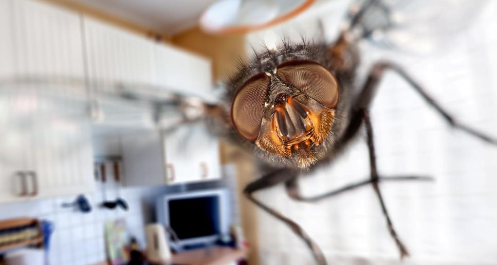 Мухи в квартире: уничтожение мух, средство от мух в помещении