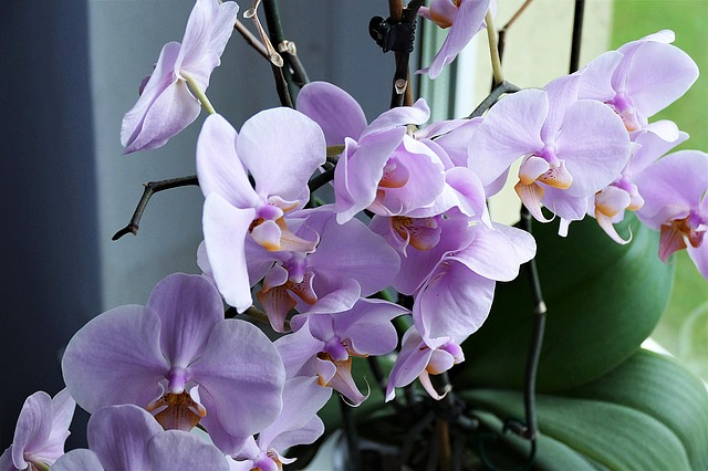 Тля на комнатных растениях: как бороться с тлей на комнатных растениях и в огороде